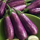 UNIQUE Gourmet EGGPLANT 'Fairy Tale' Vegetable SEEDS