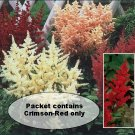 LACY PLUMES Astilbe Arendssii 'BELLA' Perennial SEEDS