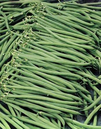Bush Beans 'Oceanis' (Phaseolus vulgaris) Seeds