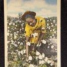 BLACK AMERICANA VINTAGE  POSTCARD PICKING COTTON