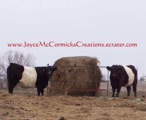 White Belly Cows
