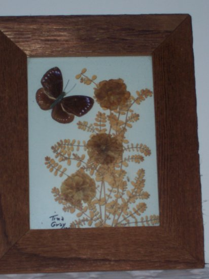 Butterfly and dried flowers between glass