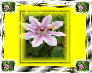 Clematis Vine Background Template