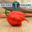 Carolina Reaper Pepper Chilli Seeds *World's Record Hottest Pepper* Extreme - 100 Seeds