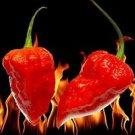 25x Red Bhut Jolokia Seeds Naga Rare Ghost Pepper Chilli  Super HOTTEST Organic