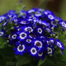 200 White Blue Daisy Flower Seeds Plants Exotic Rare Garden Decor DIY Penerials