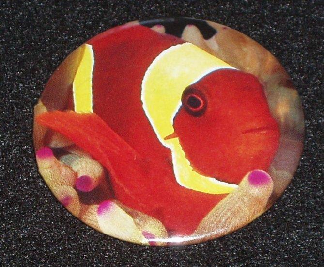 Clown fish on photo badge, pin - F 0001