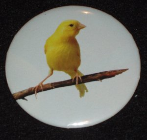 Yellow Canary bird on a badge pin  B 0001