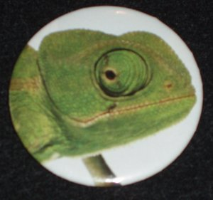 Chameleon photo on a badge, pin R 0001