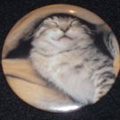Tabby kitten, cat taking a nap, photo on badge, pin C0002