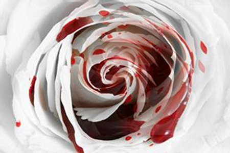 White Blood Rose 10 seeds