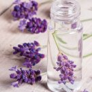 French Perfume Lavender 50 seeds