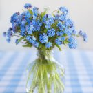 USA SELLER Common Blue Forget Me Not 100 seeds