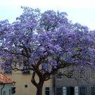 USA SELLER Royal Empress Trees/Princess Tree  10 seeds