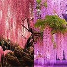 USA SELLER Pink Rain Tree  10 seeds