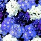 USA SELLER Quartz Waterfall Mixed Verbena 25 seeds