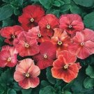 USA SELLER Flambe red Pansy 10 seeds seeds