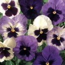 USA SELLER Matrix Ocean Breeze Pansy 10 seeds seeds