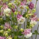 USA SELLER Aquilegia (Columbine) vulgaris Pink Petticoat 10 seeds