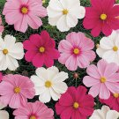 USA SELLER Cosmos Bipinnatus Mix 25 seeds