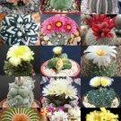 USA SELLER Rare Cactus Mix  25 seeds