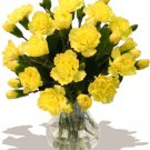 USA SELLER Yellow Carnation 25 seeds