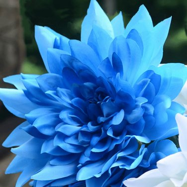 USA SELLER Sky Blue Dahlia 10 seeds