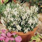 USA SELLER Angelonia White 25 seeds