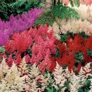 USA SELLER Astilbe Bunter Mix 10 seeds