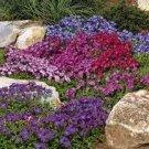 USA SELLER Cascading Royal Mix Rock Cress 25 seeds