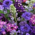 USA SELLER Blue Wildflower Mix 1000 seeds