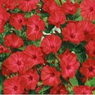 USA SELLER Red Four O'Clock 25 seeds
