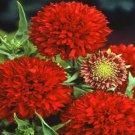 USA SELLER Blanket Flower Sundance Red 50 seeds