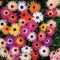 USA SELLER Ice Plant Mix 50 seeds