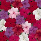 USA SELLER  Tempo Crystal Mix 25 Impatiens  seeds