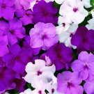 USA SELLER Walleriana Accent Premium Mystic Mix Impatiens 25 seeds