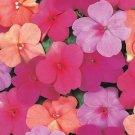 USA SELLER Walleriana Super Elfin XP Paradise Mix Impatiens 25 seeds