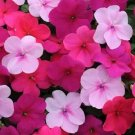 USA SELLER Walleriana Impreza Passion Mix Impatiens 25 seeds