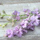 USA SELLER  Lilac Spire Larkspur 25 seeds