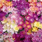 USA SELLER Lewisia Rainbow Hybrids Mix 25 seeds