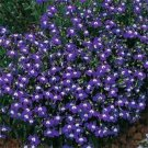USA SELLER Mrs. Clibran Lobelia 100 seeds