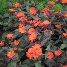 USA SELLER Vesuvius Lychnis 25 seeds