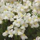 USA SELLER Nemesia White Knight 100 seeds