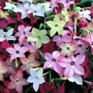USA SELLER Ornamental Tobacco Mix 100 seeds