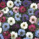 USA SELLER Love in the Mist Mix 100 seeds