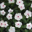 USA SELLER Dwarf Little Bright Eyes Perwinkle 50 seeds