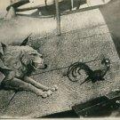 World War I. German warplane. - 8x10 photo
