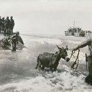 World War II. The Allies invade Sicily - 8x10 photo