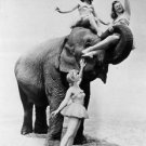 Three women and a elephant - 8x10 photo