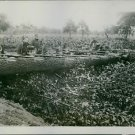 Soldiers pointing guns at the enemy during war. - 8x10 photo